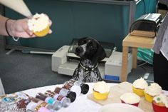 What do you think? Caption, Competition, Cupcake, Fun, Cupcakes, Captions, Cupcake Cakes, Cup Cakes, Muffin