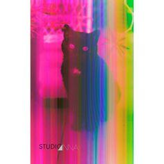 StudioAnna  -  Chat Rose #cat #studioanna_paris #retouche #Nikon #art #photoshop #D810 #pink
