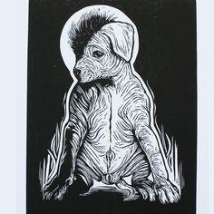 251 Mejores Imágenes De Xoloitzcuintle En 2019 Animales