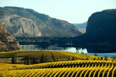 Okanagan Valley -BC's fruit basket, famous hot summers -Wonderful lakes for water sports, orchards, vineyards and wineries Canadian Thanksgiving, Once In A Lifetime, Africa Travel, Canada Travel, Amazing Destinations, European Travel, British Columbia, Travel Around The World, Beautiful Landscapes