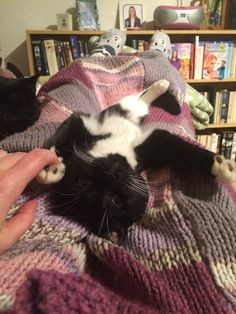 10 things that are near impossible to do if you have 2 crazy kittens.Number up to use the facilities.however desperate you are! Tuxedo Kitten, Number 8, Crazy Cats, Shag Rug, Kittens, Shaggy Rug, Cute Kittens, Blanket, Baby Cats