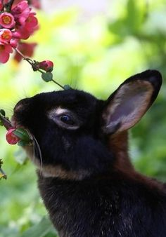 The American Rabbit Breeders Association currently recognizes 47 unique rabbit breeds and 13 different breeds of cavies.