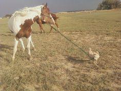 Cowboy Mowgi