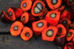 Der VKI sagt: Palmöl ist in aller Munde - http://www.dieweinpresse.at/der-vki-sagt-palmoel-ist-in-aller-munde/