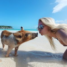 BUCKETLIST: Swim With Pigs In Bahama's
