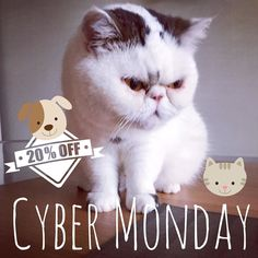 20% off everything for Cyber Monday but be quick as ends at midnight! Use code CYBER  #cybermonday #t #mondaymotivation #monday Lou Instagram, Instagram Posts, 20 Off, Monday Motivation, Cyber Monday, Coding, Cats, Animals, Gatos