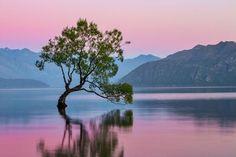 Sunrise At The Wanaka Tree Photo by Cat Burton -- National Geographic Your Shot