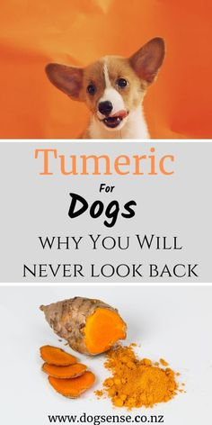Is it safe to give tumeric or turmeric to your dogs? How easy is it to make the golden paste and is it safe for dogs? Top tips on why you and your dog will love tumeric! Dog Health Tips, Dog Health Care, Healthy Pets, Healthy Dog Treats, Healthy Nutrition, Dog Nutrition, Proper Nutrition, Sports Nutrition, Dog Care Tips