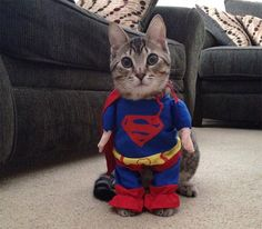 28 Halloween Costumes For Cats That Will Put A Smile On Your Face Read more at http://www.business2community.com/social-buzz/28-halloween-costumes-for-cats-that-will-put-a-smile-on-your-face-01037524#hxxFuwXaqWiSgWGr.99