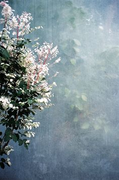 Plant life / Marcos Rivas