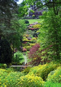 Leonardslee Gardens, West Sussex, UK | View with multi-colored flowering azaleas across small lake towards house (16 of 19) by ukgardenphotos, via Flickr