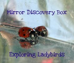 Cool idea...Mirror Discovery Box - Ladybugs (probably want to keep it out of the sun so you don't cook the bugs though!), via Sun Hats & Wellie Boots