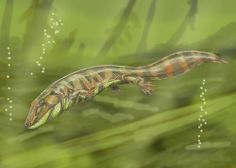 Images of eucritta | Loxomma, an early tetrapod