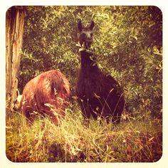 Quito-Ecuador----- bad llama (; lol