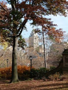 Central Park NYC - Just Me and A Camera