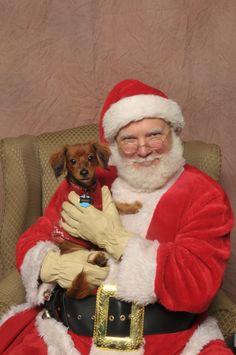 Best Christmas dog ever!