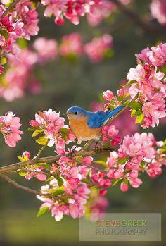 Pretty Birds, Beautiful Birds, Animals Beautiful, Cute Animals, Pretty Flowers, All Birds, Little Birds, Love Birds, Funny Bird