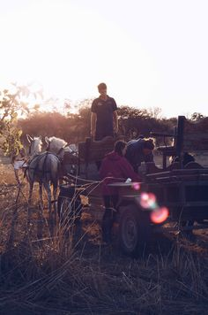 Sunset carriage rides in Zimbabwe - all part of our equestrian working holiday