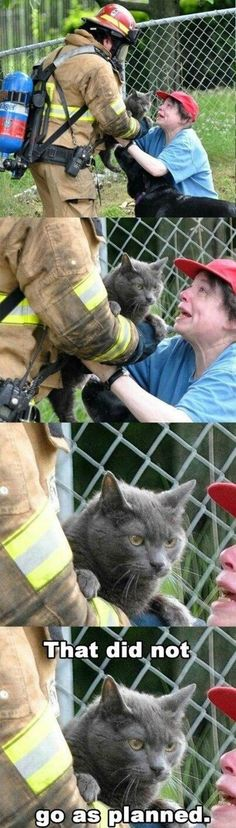 Fireman saves cat from house fire.