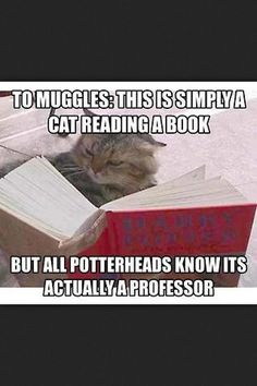 Muggles... they think cats are just cats, broomsticks are just broomsticks, and the space between two platforms is just a wall.... it's sad, actually, that they can't see the true side of things.