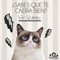 Cuando se amanece de malas  #grumpycat #meme #catlover #funny #Colombia