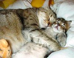 Gatti abbracciati che dormono