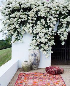 White bougainvillea blooms pair perfectly with colorful kilim textiles for a bohemian outdoor picnic locale Garden Concept Outdoor Rooms, Outdoor Gardens, Outdoor Living, Outdoor Patios, Outdoor Seating, Rue Verte, White Gardens, Dream Garden, Garden Inspiration
