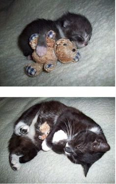 grown kitten, same bear <3