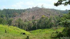 En Honduras, los carteles de la droga han deforestado buena parte de los bosques tropicales de ese país, con el objetivo de construir nuevas rutas de escape, escondites y aeropuertos ilícitos para el transporte de estupefacientes.  Créditos: David Wrathall   BBC