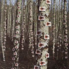 Approximately 300 colour prints temporarily attached to silver birch trees. The eyes have it. Designed by Storm Thorgerson for Catherine Wheels single cover Gasoline Storm Thorgerson, Land Art, Street Art, Instalation Art, Rene Magritte, Gcse Art, Mark Rothko, Photomontage, Art Plastique