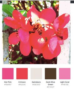 Floral spring flowers color palette - pink and neutral design inspiration Book Creator, The Creator, Colorful Flowers, Spring Flowers, Creative Thinking, Color Pallets, Color Theory, Bright Pink, Coloring Books