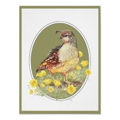 State Bird & Flower, California Quail and Poppy by countrymousestudio