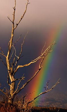 Rainbow Dreams by Jeremiah Fisher, via 500px