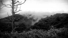 Niebla  #nature #photography #blackandwhite