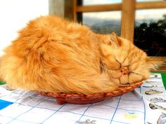 Durmiendo en una cerámica