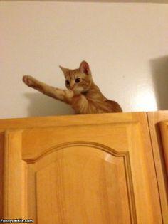 Huge Leg Stretch - funnycatsite.com#cats #funny #cute