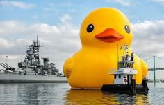 #moveonarts #muvonupart #jacobbloomfields  Coos Bay Oregon Worlds Biggest Floating Rubber Duckie lol