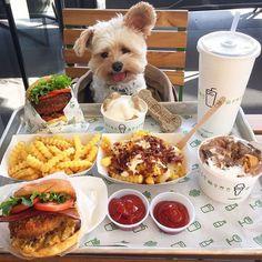 Era un hambriento perro callejero. Alguien lo adoptó y lo lleva a comer exquisiteces todos los días