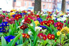 London flower