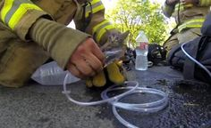 Firefighter saves kitten\'s life