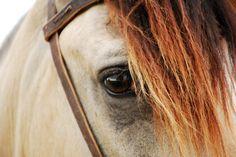 cabeza de caballo - Buscar con Google