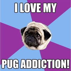 Just embrace your pug addiction.