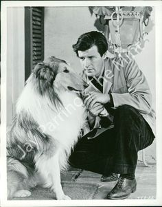 1446508 Photo Peter Breck Lad Lad A Dog 1962  Such a sweet film! <3<3<3 it!