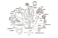 Acupuncture points or acupressure points connect meridians to specific internal organs. Acupuncture points are stimulated to treat deseases. Acupuncture For Weight Loss, Acupuncture Points, Acupressure Points, Natural Cures, Natural Healing, Hand Reflexology, Reflexology Points, Acupuncture Benefits, Mudras