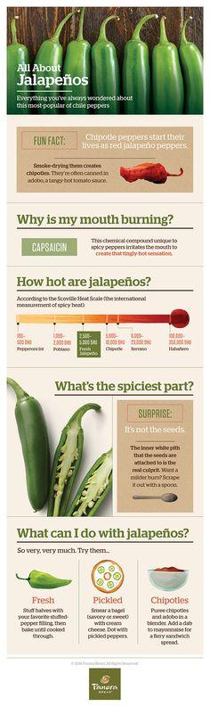 Do You Know Jalapeños?