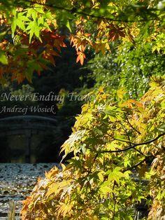 Ryoan-ji, Kyoto, Japan.  Autumn in Japan is very beautiful