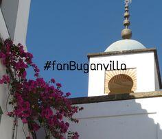 Nuestra #buganvilla más hermosa quiere hacerse famosa, ayúdanos a que dé la vuelta al mundo. hazte fan y difunde la imagen