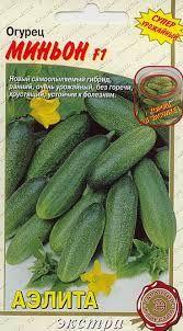 Kukr MINJON: Väga varajane iseviljuv hübriid. Vili kaalub 75-90 g, pikkusega 7-9 cm. Kibeaineteta. Haigustekindel. Suurepärased maitseomadused, sobib soolamiseks ja marineerimiseks. Seemneid pakis 0,25 g.