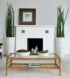 13 plantas para cultivar dentro de casa