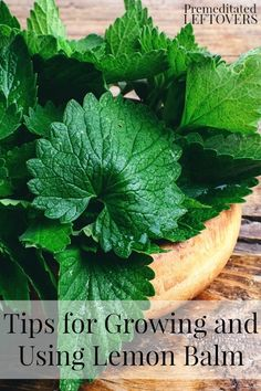 Tips for Growing and Using Lemon Balm - Here are some tips on growing lemon balm in your garden and how to use it in cooking and home remedies.